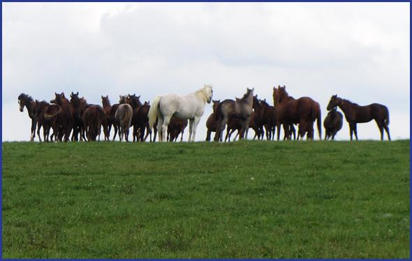 Penn Ridge Farms